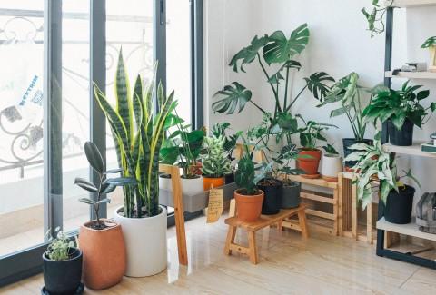 Tips Merawat Furniture yang Terbuat dari Kayu Jati