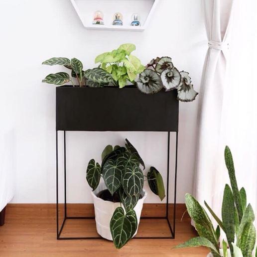 Memperindah ruangan rumah denga Planter Box
