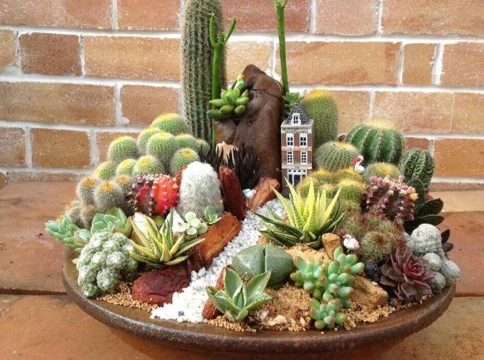 Manfaat Menanam Kaktus Didalam Diruangan