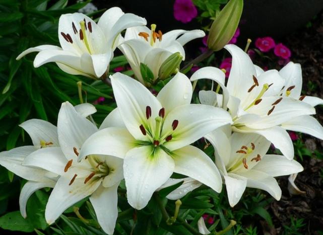 Cara Menanam Bunga Di Halaman Dengan Mudah