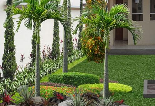 Tips Menanam Pohon Di Depan Halaman Rumah