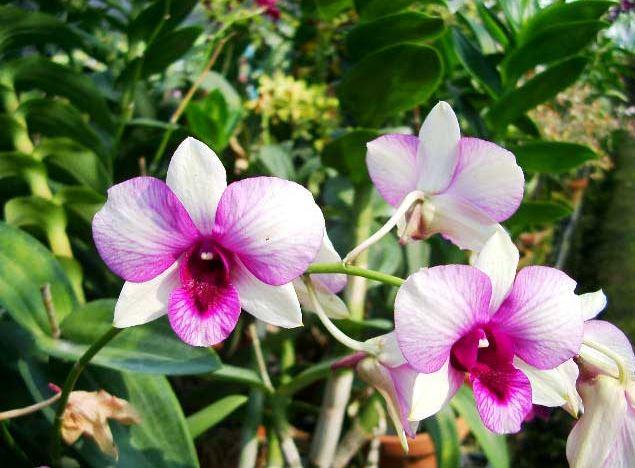 Selain Cantik Inilah Manfaat Bunga Anggrek