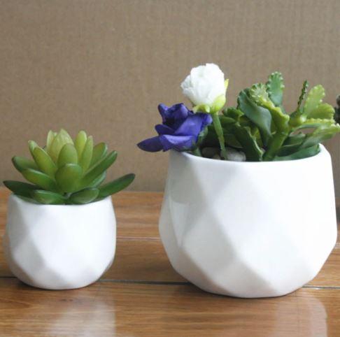 Mengenal Jenis-Jenis Pot Untuk Tanaman Indoor Dan Outdoor