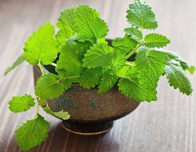 Manfaat Menanam Tanaman Herbal Dirumah Untuk Kesehatan