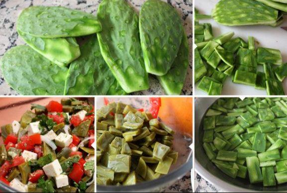 Manfaat Mengkonsumsi Tanaman Kaktus Untuk Kesehatan Tubuh