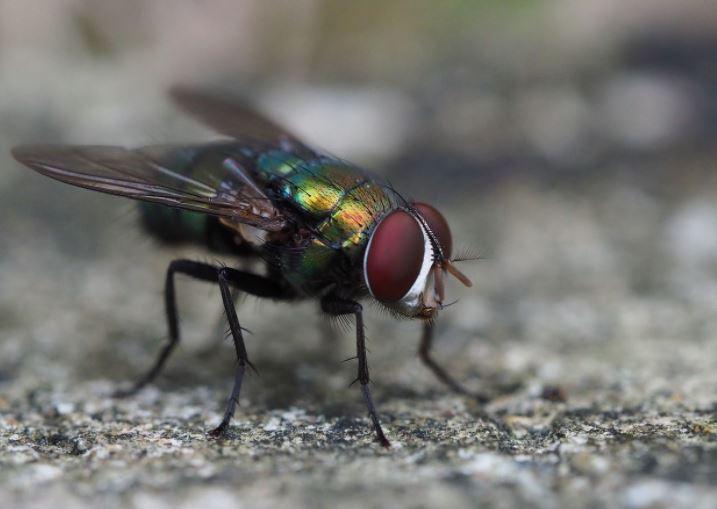 6 Cara Mudah Dan Tepat Mengusir Lalat Dari Rumah