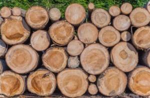 woodstock.co.id